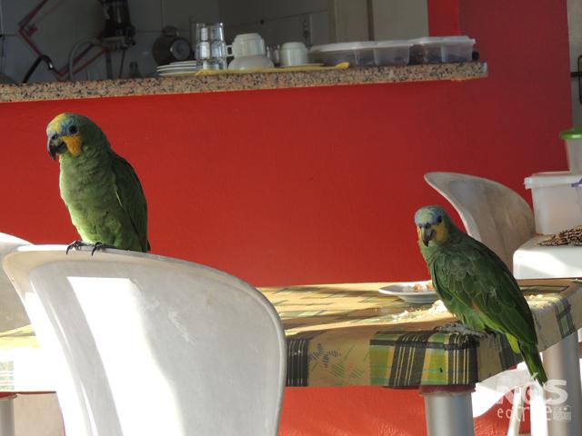 Aves da Pousada Solar das Gaivotas