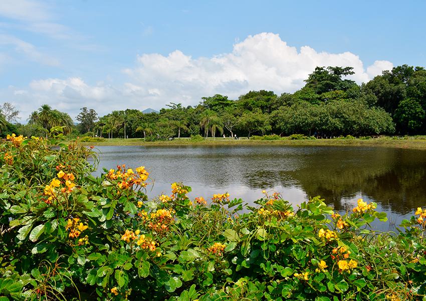 A beleza do Bosque da Barra